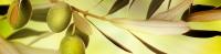 Фартук ХДФ Элит Оливковая ветвь 3 х 610 х 2440 мм в Орехово-Зуево СтройДвор на Карболите