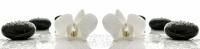 Фартук для кухни Орхидея №1 3 х 610 х 2440 мм в Орехово-Зуево СтройДвор на Карболите
