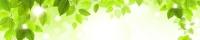 Фартук АБС Березовые листья (№90) 600 х 3000 мм в Орехово-Зуево СтройДвор на Карболите