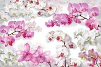 Фотообои 168 Бал орхидей 392 х 260 в Орехово-Зуево СтройДвор на Карболите