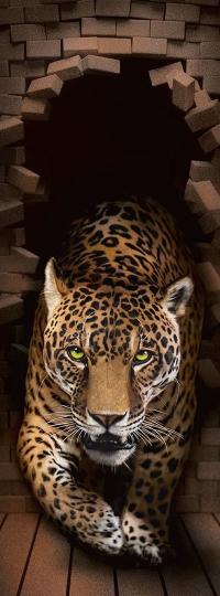 Фотообои Леопард 98 х 260 в Орехово-Зуево СтройДвор на Карболите