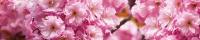 Фартук АБС Цветение вишни 600 х 3000 мм в Орехово-Зуево СтройДвор на Карболите